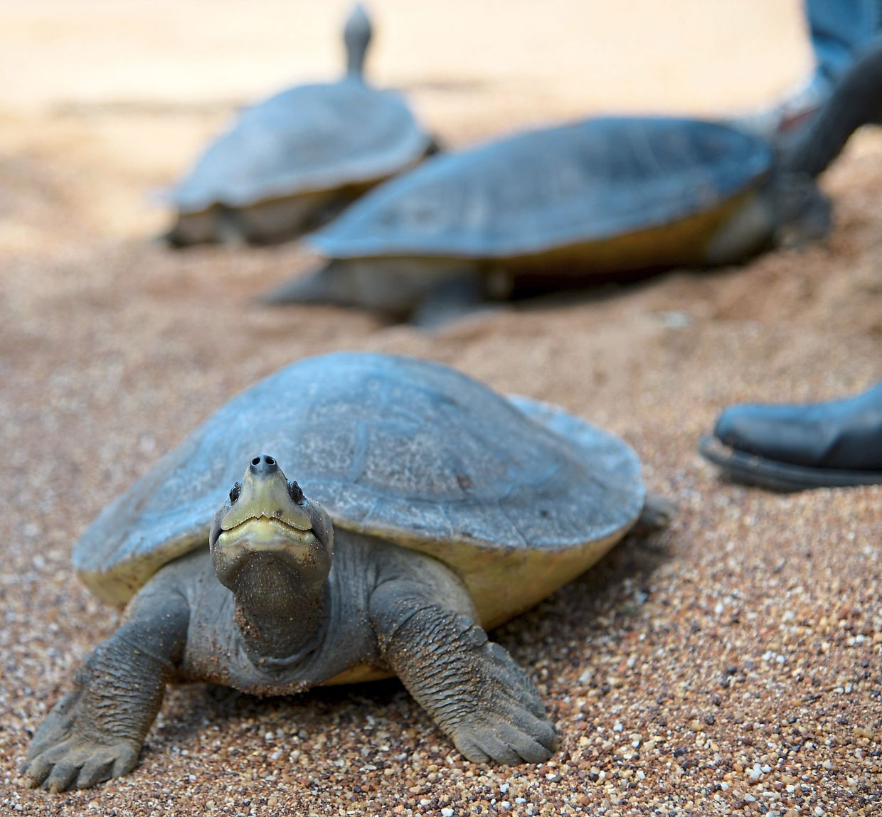 Depending on how old you are, your terrapin or turtle might outlive you as these creatures can live very long!