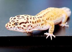 7 things beginners need to know about keeping reptiles as pets