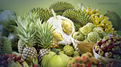 High durian output lifts Thai fruit production in the South