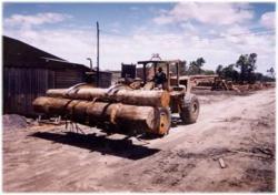 Indonesia arrests seven suspects for illegal logging in West Kalimantan