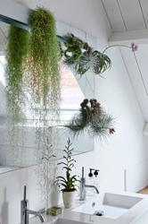 Spanish Moss: Low maintenance greenery for your living room