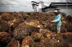 Malaysia's Sime Darby seeks detail after palm oil ban request