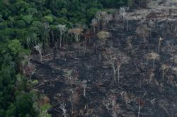 Brazil Amazon deforestation up in June, set for worst year in over a decade