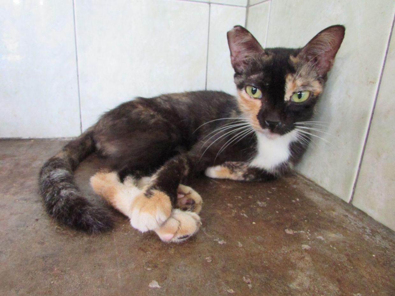 Raisin is up for adoption. — PAWS/Agnes Lim
