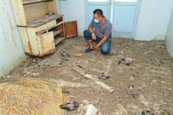Pigeons take over abandoned homes