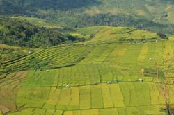 Indonesia's new food estate to keep stockpiles, boost agriculture