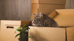 Katz Tales: Preparing your cat to move house