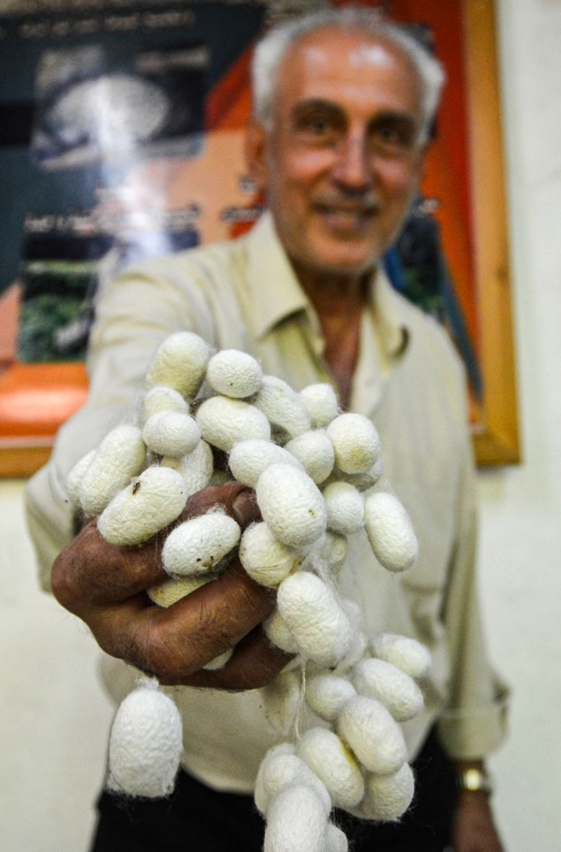 Muhammad Saud holds a handful of silkworm cocoons at his home workshop. Photo: AFP