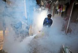 Pandemic overshadows dengue threat
