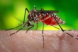 Laos: Dengue cases rising fast; more than 20,000 tested for Covid-19