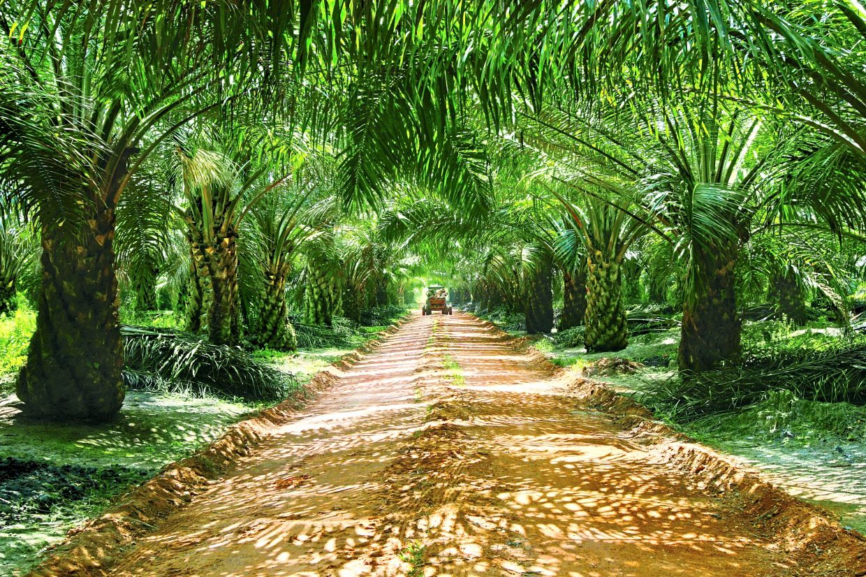 Positive outlook: TA Securities believes that exports will continue to recover in the next two months due to the decline in palm oil inventories in China and India, coupled with an attractive CPO discount against other edible oils.