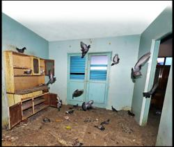 Penang city council issues notices to two unit owners for breeding pigeons in Rifle Range flats