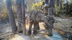 What you should know about the dark side of Thailand's elephant tourism