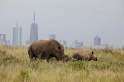 Wild animals losing freedom to roam as city encroaches on Nairobi park