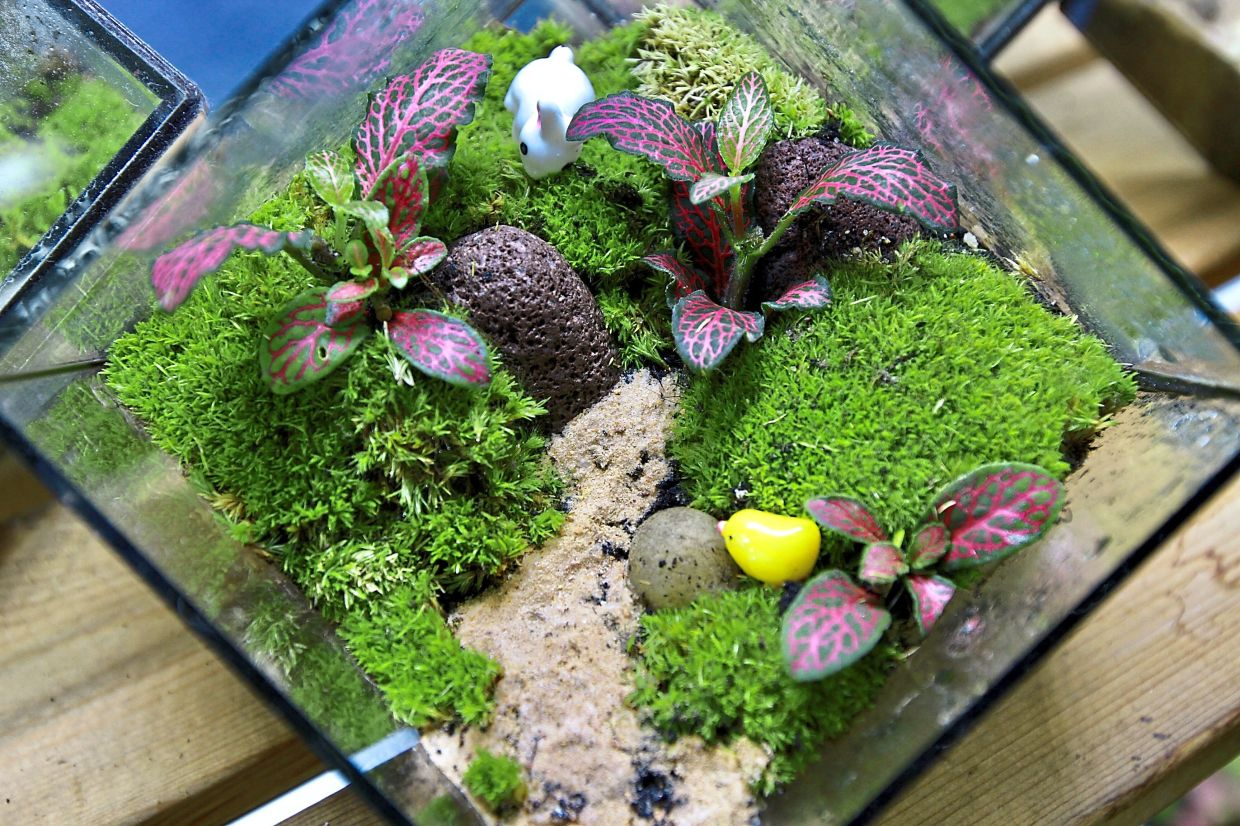Malaysian Terrarium Artist Gives Us A Peek Into The World Of Miniature Gardens The Star