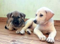 Puppy adoption drive this Sunday
