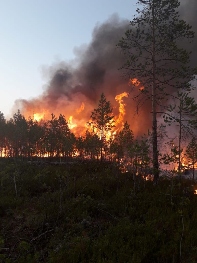 Here's just one reason why the planet sorely needs these cancelled and postponed green meetings: The Arctic is warming twice as fast as the rest of the planet and the result is wildfires in places like a Siberian forest in Russia. — Russia's Aerial Forest Protection Service/Reuters