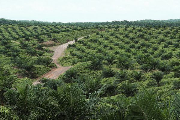 Cepatwawasan said plantation's profit surged by more than RM2.13mil or more than 100% from loss of RM17,000 to profit of RM1.96 million mainly due to an increase in average selling price of fresh fruit bunches (FFB) by 19% and a lower production cost.
