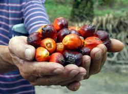 'Palm Oil-God's Gift' is new slogan for palm oil campaign, says Commodities Minister