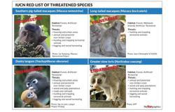 Malaysia's primate species in peril