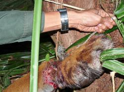Urgent need for PDRM wildlife crime unit