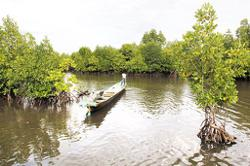Indonesia to restore mangrove forests to cut carbon emission