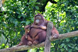 Cute new additions to Taiping zoo and night safari