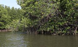 Avoid mangrove forests when building roads, says NGO