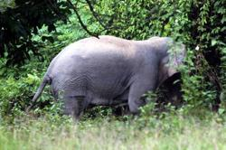 Security guard apparently killed by elephants he was feeding in Johor