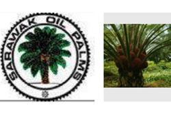 RHB upbeat on Sarawak Oil Palms as CPO prices rally