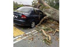 Big tree that fell on car located on private land, says Negri MB