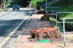 Road widening project to include 10 trees saved from the axe