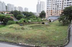 Landowner ordered to clear overgrowth or risk facing fine, jail term