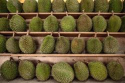 Spike in demand: stinky durians enjoy online virus boom