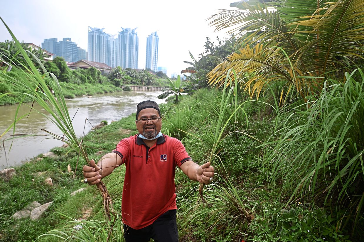 Mohamad Halim holding up lemongrass which is among the produce planted at the banks of Sungai Klang.