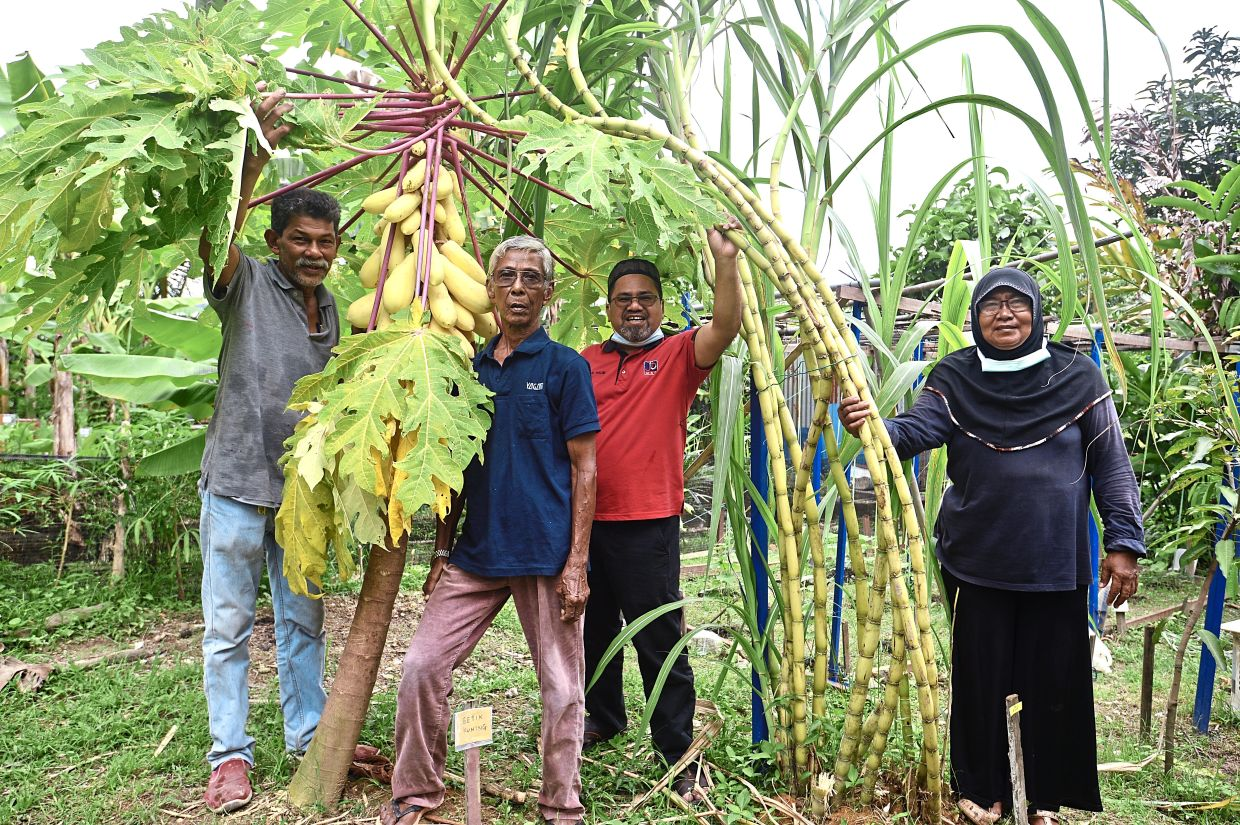 Mohamad Halim (third from left) and his neighbours from Rumah Pangsa Taman Keramat at their community garden.