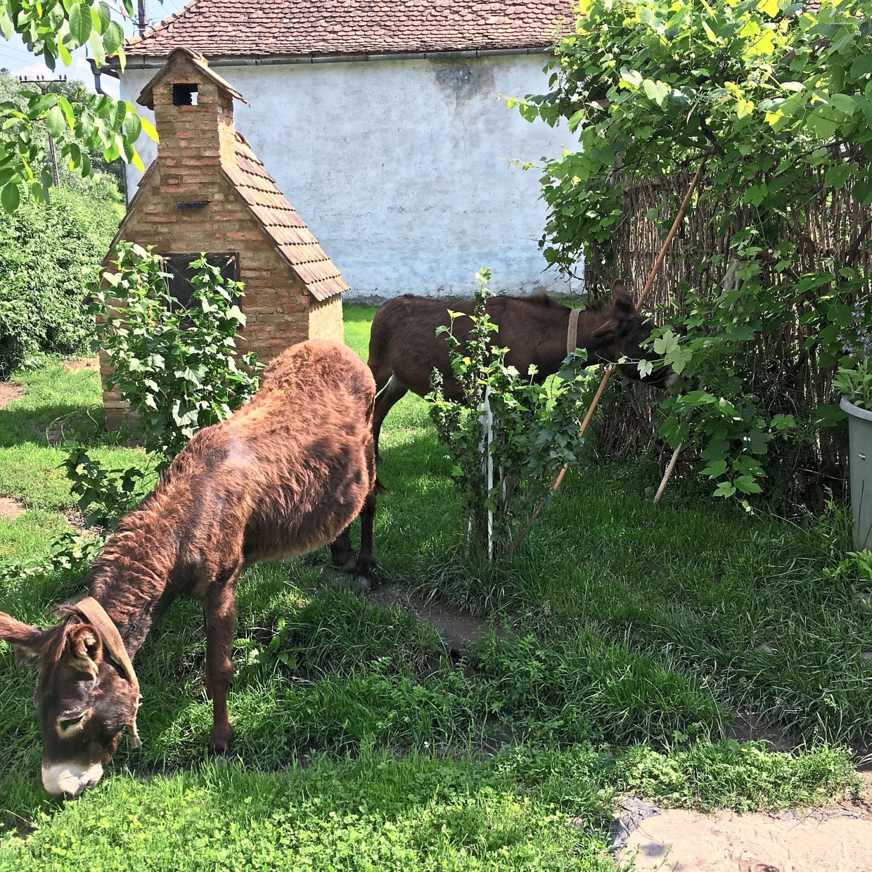 A couple of donkeys at the sanctuary. In the background is a traditional oven which Harfmann uses for baking his own bread.