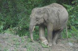 What a memory: Five escape unhurt after elephant attacks car