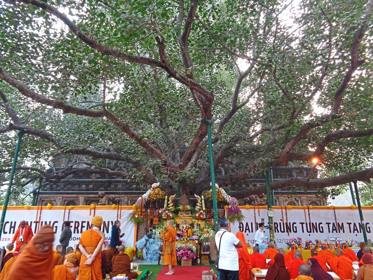 The bodhi tree at Mahabodhi Temple, a World Heritage Site. — Photos: CHEE YEN LEE
