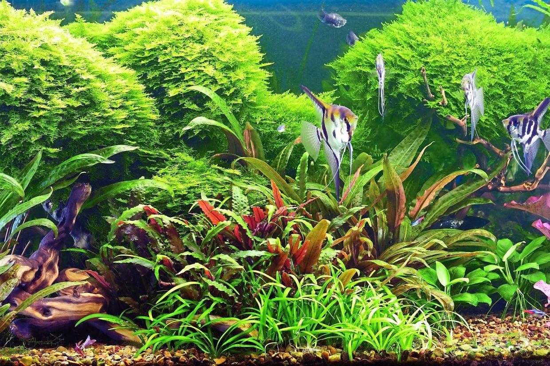 Skillfully landscaped fish tank with angelfish. Photo: depositphotos.com