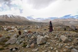 Tech helps cashmere herders, hazelnut farmers fight soil erosion in Asia