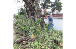 Tree felling at Jalan 17/2 draws ire of PJ residents