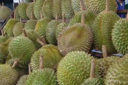 Durian season but no crowd