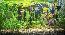 6 tips to setting up a beautiful aquarium at home
