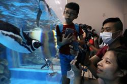 Penguins and jellyfish wow visitors at new Taiwan aquarium