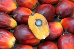 Labour shortage worsens in oil palm sector amid pandemic