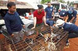 Butcher quits dog meat trade in win for activists