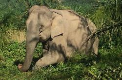 Perhilitan captures three elephants 'terrorising' Kota Tinggi villages