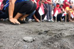 Indonesia: Thousands of baby turtles get first taste of the sea