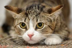 Katz Tales: 5 signs that your cat trusts you